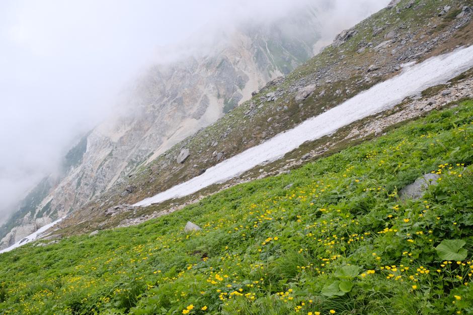 白馬岳のシナノキンバイ