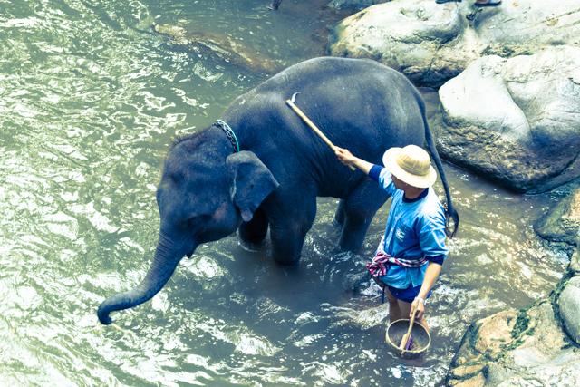 メーサーエレファントキャンプの子ゾウの水浴び