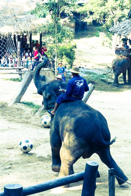 サッカーをするゾウ