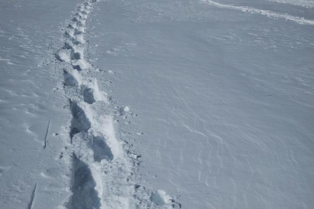 スノーシューで歩いた跡