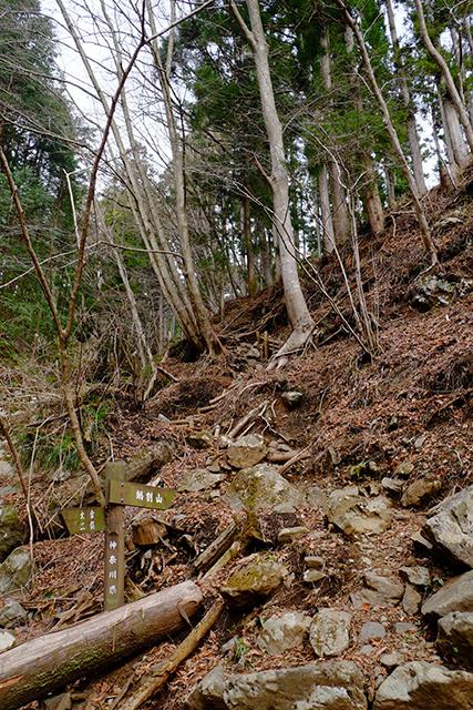 鍋割山登山道
