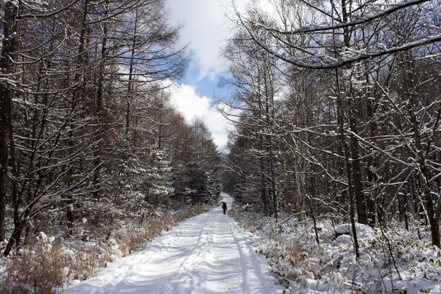 美濃戸林道