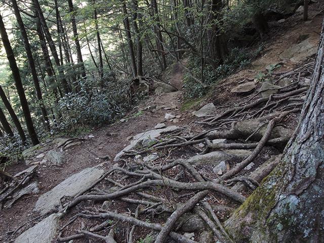 瑞牆山への登山道