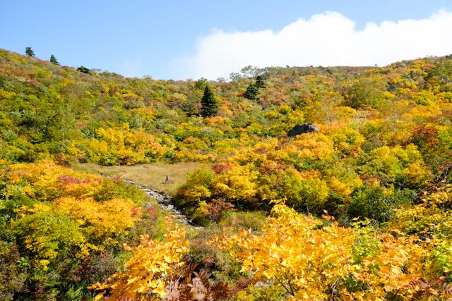 栗駒山の苔花平の紅葉
