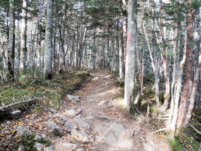 大弛峠から金峰山への登山道