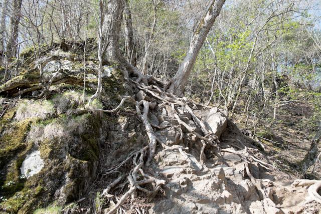 両神山の登山道