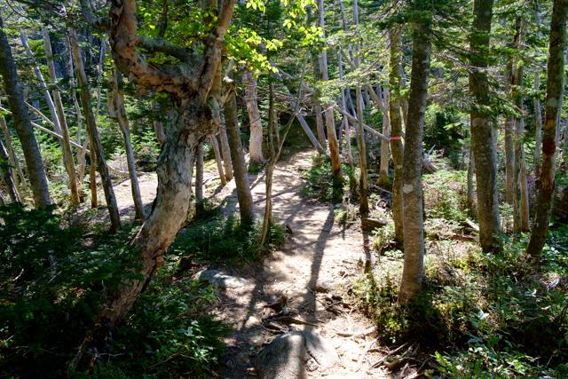 大弛峠から国師ヶ岳への登山道