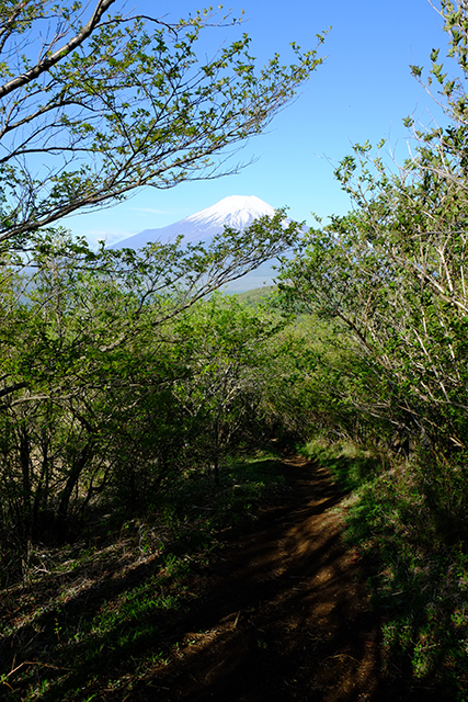 平尾山への登山道からの富士山