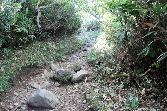 八方台登山口からの登山道