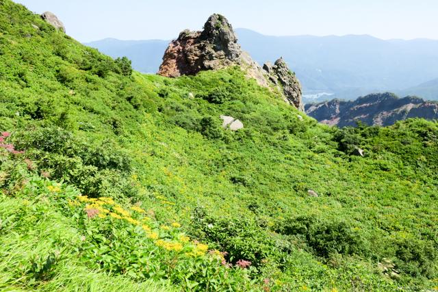 磐梯山のお花畑