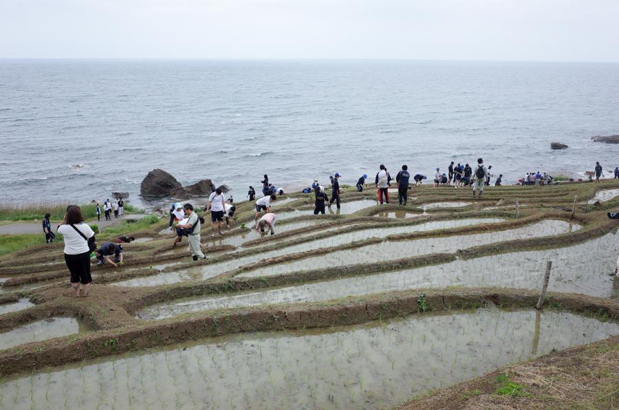 白米千枚田の田植え