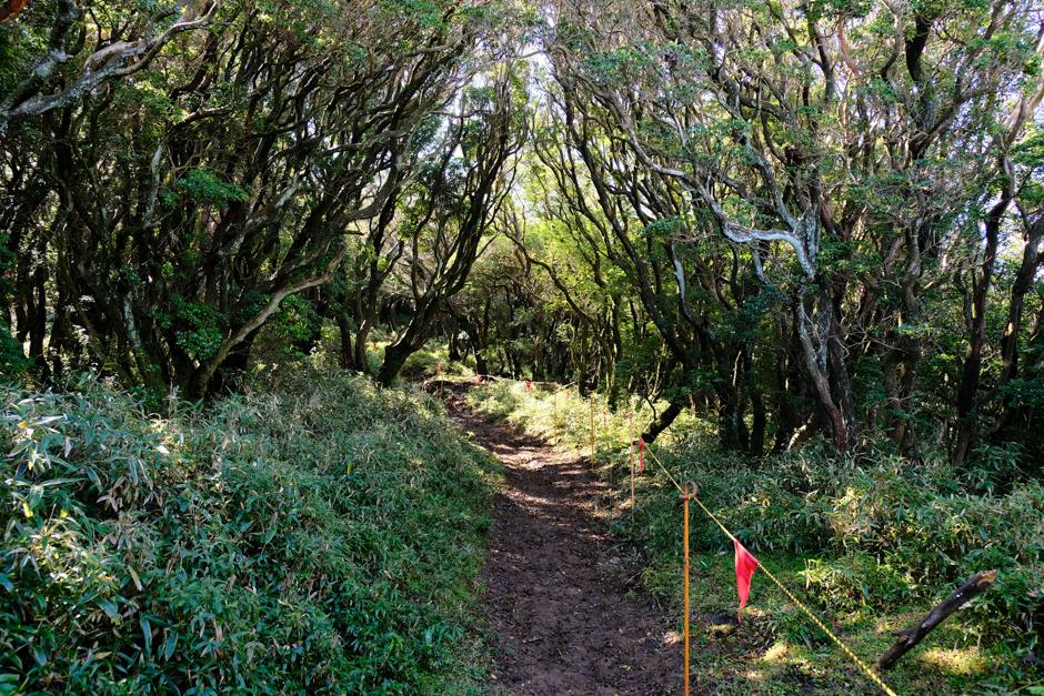 達磨山への登山道